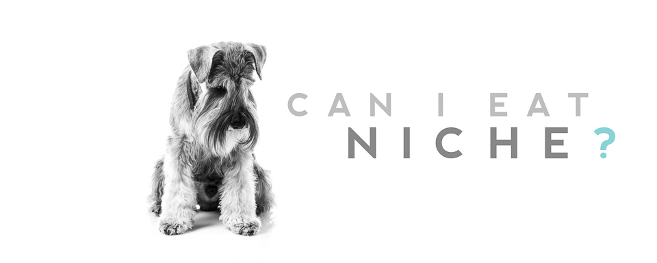 "Janne Aavasalo - Dog wondering: ""Can I eat niche?"""