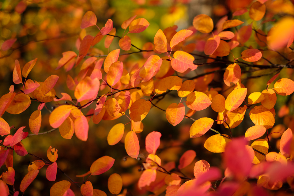 Yellow and red foliage in dappled light.