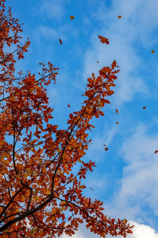 Tree shedding leaves.