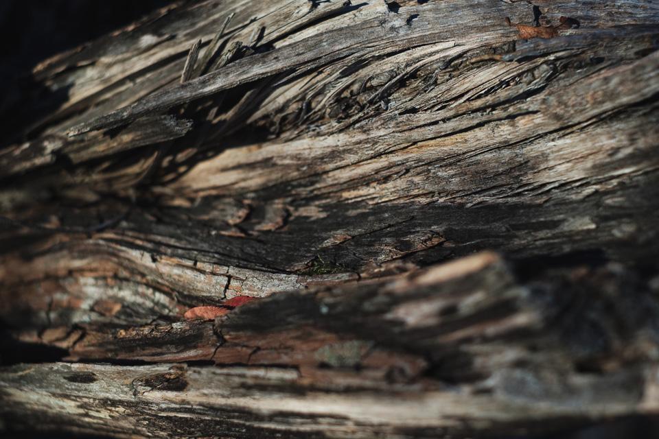 A cracked tree stump.